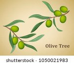 olive tree leaves  natural... | Shutterstock .eps vector #1050021983