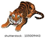 roaring angry tiger  vector... | Shutterstock .eps vector #105009443