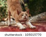 Red cat stretching himself - stock photo
