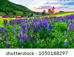 summer purple flowers meadow in ... | Shutterstock . vector #1050188297