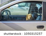dog sitting on the front seat...   Shutterstock . vector #1050315257