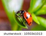 Ladybug Sitting On A Flower...