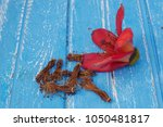 red cotton tree flowers on... | Shutterstock . vector #1050481817
