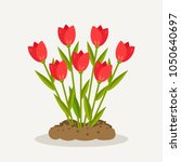 tulips  red roses  bunch of...   Shutterstock .eps vector #1050640697