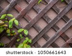 diagonal lattice vines rain... | Shutterstock . vector #1050661643