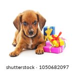 Stock photo puppy with gifts isolated on a white background 1050682097