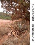 desert scene landscape agave... | Shutterstock . vector #1050684743