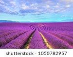 lavender flower blooming... | Shutterstock . vector #1050782957