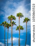 grove of palm trees against a... | Shutterstock . vector #1050865523