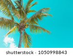 one big tropical palm tree on... | Shutterstock . vector #1050998843