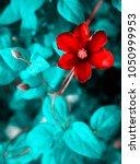 bright crimson red large... | Shutterstock . vector #1050999953