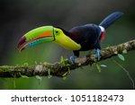 keel billed toucan   ramphastos ... | Shutterstock . vector #1051182473