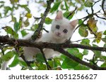 Stock photo a small fluffy kitten sitting high on the branches of a tree and afraid to jump down 1051256627