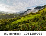 landscape with clouds  jungles  ... | Shutterstock . vector #1051289093