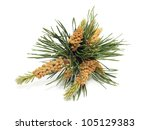 Blooming Pine Tree Branch On A...