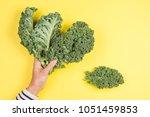 woman hand holding a bunch of... | Shutterstock . vector #1051459853