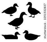 set of ducks silhouettes in... | Shutterstock .eps vector #1051532837
