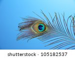 peacock feather on blue