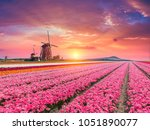 landscape with tulips ... | Shutterstock . vector #1051890077