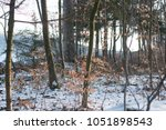 icy broadleaf forest in early... | Shutterstock . vector #1051898543