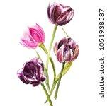 watercolor tulips flowers.... | Shutterstock . vector #1051938587