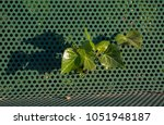 Small photo of An Ivy grows through a green perforated metal bench