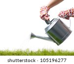 Gardener's hands holding metal watering can watering fresh grass - stock photo