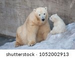 polar bear mother and her child. | Shutterstock . vector #1052002913