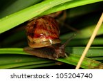 moist snail! - stock photo
