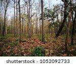 trail 's walkway in the... | Shutterstock . vector #1052092733