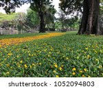 yellow flower on the grass at... | Shutterstock . vector #1052094803