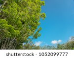 fresh green tree in public park ... | Shutterstock . vector #1052099777