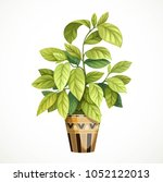 decorative tropical tree with... | Shutterstock .eps vector #1052122013