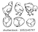 set of farm chicks and eggs.... | Shutterstock .eps vector #1052145797