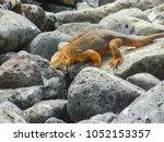 marine iguana on santiago... | Shutterstock . vector #1052153357