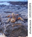 marine iguana on santiago... | Shutterstock . vector #1052153393