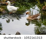 ducks swimming in the park's... | Shutterstock . vector #1052161313