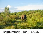 image of the elephants of the... | Shutterstock . vector #1052164637