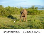 image of the elephants of the... | Shutterstock . vector #1052164643
