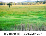 Small photo of Wetlands in wetlands