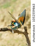 the european bee eaters  merops ... | Shutterstock . vector #1052559863