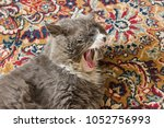 Stock photo cat on the carpet beautiful cat in the house 1052756993