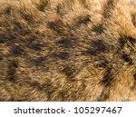 Striped Skin A Cat In The...