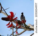 dainty chirpy  little ... | Shutterstock . vector #1053034997