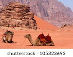 two camels sit on desert ground ... | Shutterstock . vector #105323693