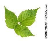 Raspberry Green Leaves Isolate...