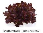 Red Oak Lettuce On White...