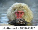 snow monkey in natural hot...   Shutterstock . vector #1053740327