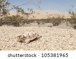 A desert horned lizard with the Kelso Dunes in the background. - stock photo