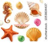 Shell  Snail  Mollusk  Starfis...